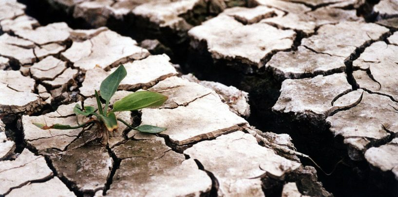 Iaşul este afectat serios de secetă