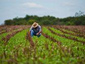 Agricultura, în topul locurilor de muncă