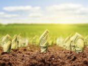 Mai multe cereri de finanțări de la agricultorii ieșeni
