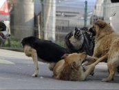 Câinii fără adăpost alertează oraşul