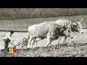 Inimă de Român | 01.02.2017 | Alexandru Amititeloaie, invitat Cristian Ploscaru | 1907, o pagină tristă în istoria poporului român