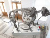 Dinozaurii au venit la Galaţi