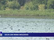 Delta din inima Moldovei
