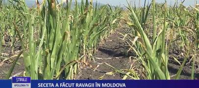 Seceta a făcut ravagii în Moldova