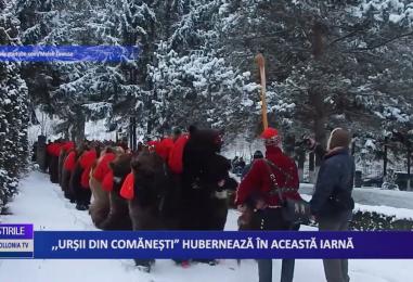 """,,Urșii din Comănești"""" hibernează în această iarnă"""